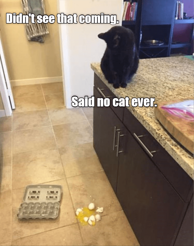 Floor - Didn't see that coming. Said no cat ever.