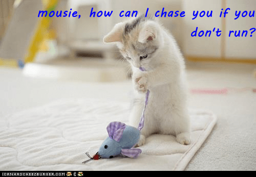 Cat - mousie, how can I chase you if you don't run? CANHASCHEE2EURGERCOM