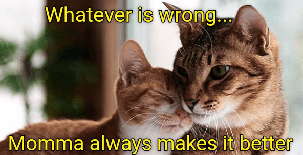 Cat - Whatever is wrong Momma always makes it better