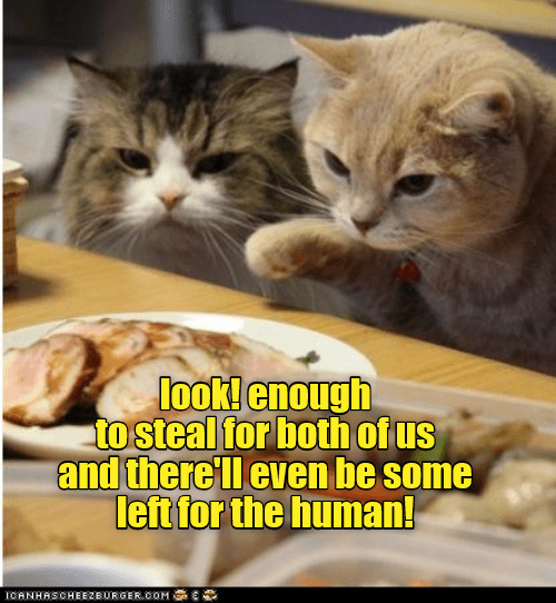 Cat - look! enough to steal for both of us and there ll even be some left for the human! ICANHASCHEEZBURGERCOM