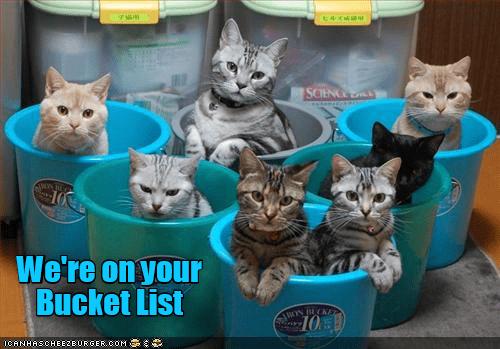 Cat - SCEN N E We're on your Bucket List N ECKE 10 ICANHASCHEE2EURGER cOM