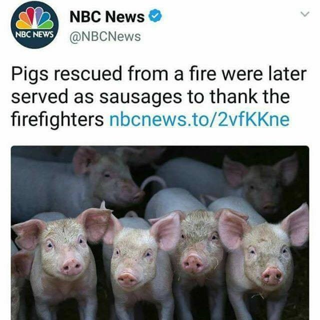 Funny meme about firefighters saving pigs and then eating them as sausage.