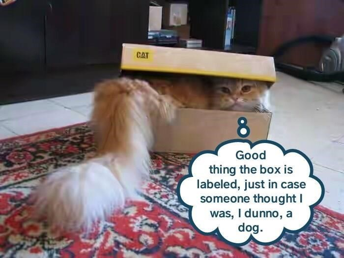 box Memes Cats funny - 9070899968
