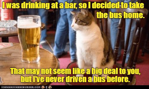 Memes Cats - 9070900224