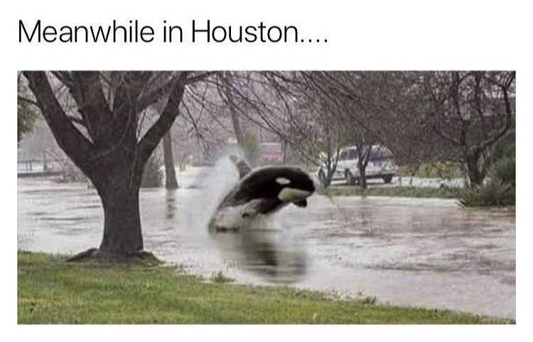 a photoshopped meme about a dolphin swimming in flooded houston