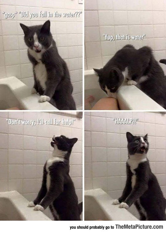 funny cat meme of kitty asking for help to save you from the water