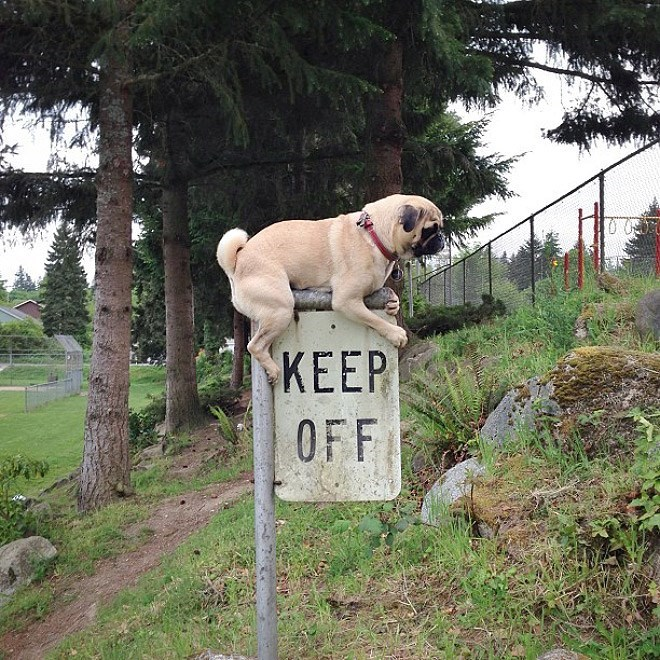 Dog - KEEP OFF