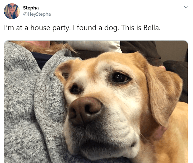 tweet about meeting a dog in a party
