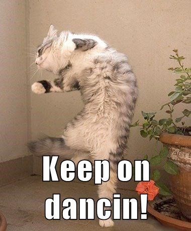 dancing cat meme - 9071482624