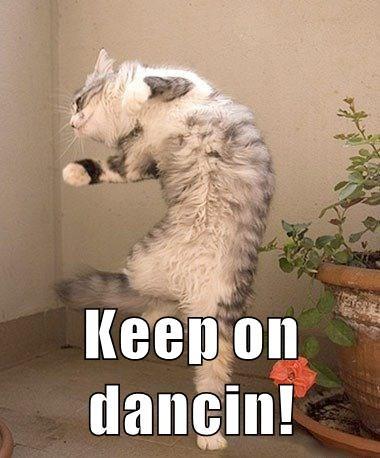 dancing cat meme - 9071482624