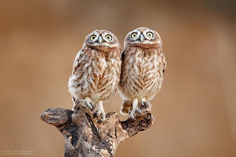 Owl - flin SkalanAY ww.isse cem www.