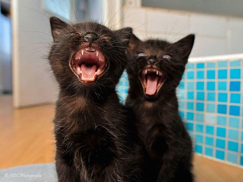 Cat - NCPhotographe