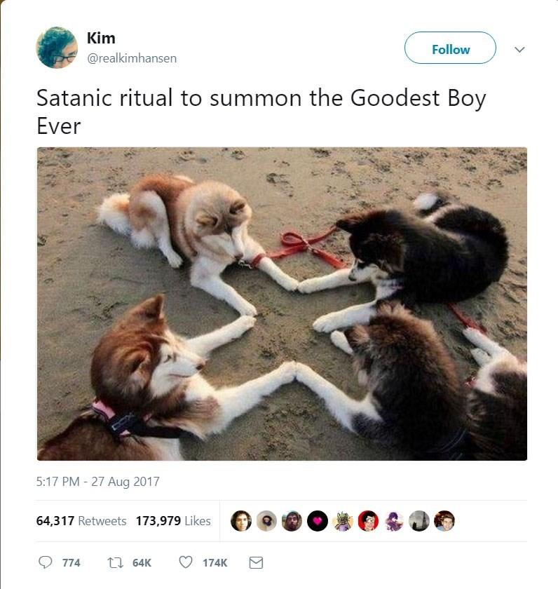 Adaptation - Kim Follow @realkimhansen Satanic ritual to summon the Goodest Boy Ever 5:17 PM - 27 Aug 2017 64,317 Retweets 173,979 Likes t64K 174K 774