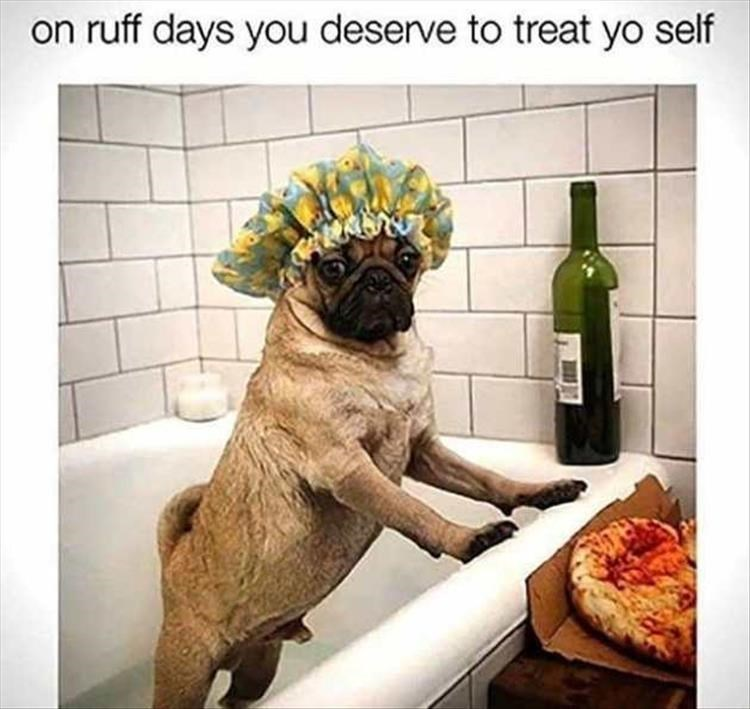 dogs relaxing bathroom - 9071618816