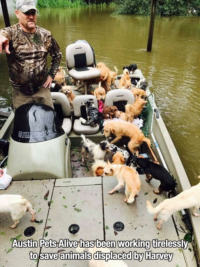 Waterway - ALUMACRAFY Austin Pets Alive has been working tirelessly to save animals displaced by Harvey