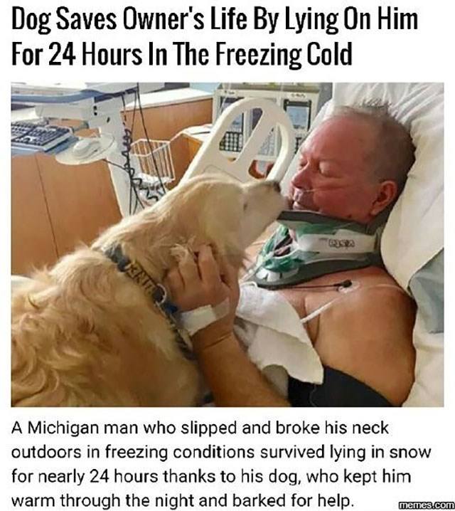 Photo caption - Dog Saves Owner's Life By Lying On Him For 24 Hours In The Freezing Cold A Michigan man who slipped and broke his neck outdoors in freezing conditions survived lying in snow for nearly 24 hours thanks to his dog, who kept him warm through the night and barked for help memes.com