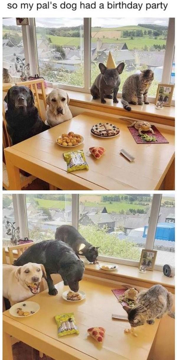Dog breed - so my pal's dog had a birthday party
