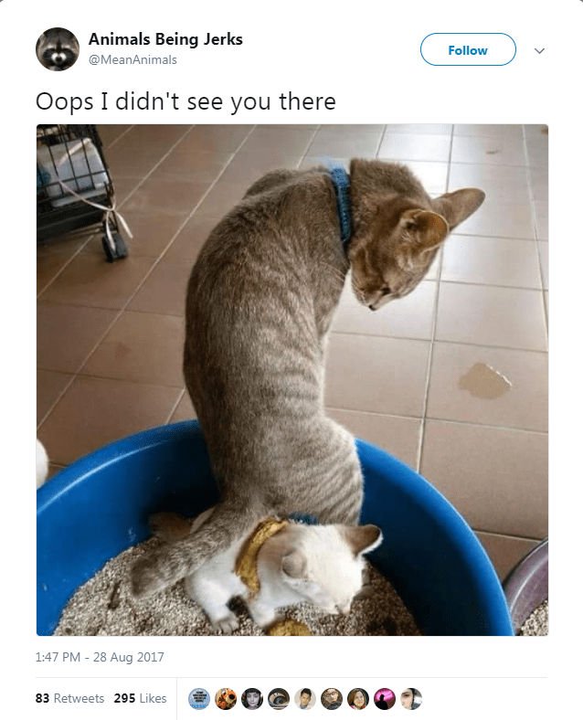 Cat - Animals Being Jerks Follow @MeanAnimals Oops I didn't see you there 1:47 PM - 28 Aug 2017 83 Retweets 295 Likes