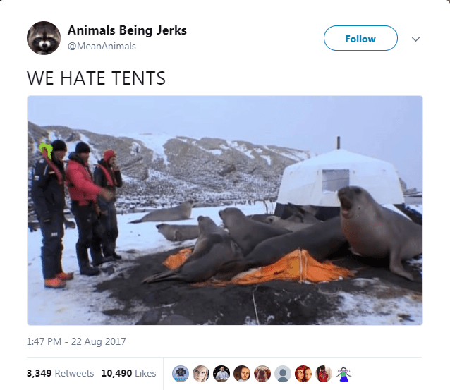 Adaptation - Animals Being Jerks Follow @MeanAnimals WE HATE TENTS 1:47 PM - 22 Aug 2017 3,349 Retweets 10,490 Likes