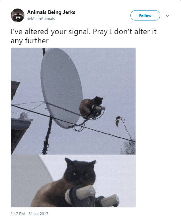 Cat - Animals Being Jerks Follow @MeanAnimals I've altered your signal. Pray I don't alter it any further 1:47 PM - 31 Jul 2017