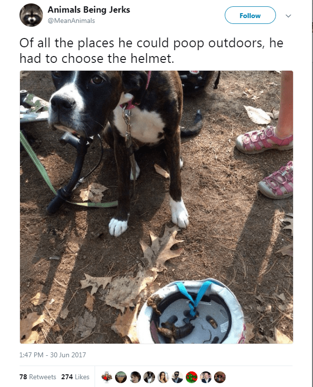 Canidae - Animals Being Jerks Follow @MeanAnimals Of all the places he could poop outdoors, he had to choose the helmet. 1:47 PM - 30 Jun 2017 78 Retweets 274 Likes