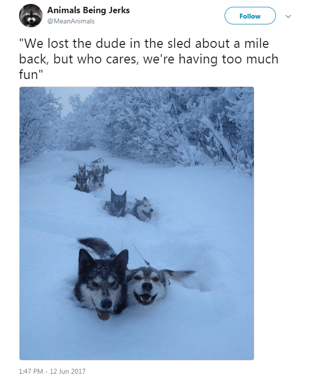 """Canidae - Animals Being Jerks Follow @MeanAnimals """"We lost the dude in the sled about a mile back, but who cares, we're having too much fun"""" 1:47 PM - 12 Jun 2017"""
