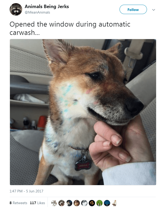 Dog - Animals Being Jerks Follow @MeanAnimals Opened the window during automatic carwash... 1:47 PM - 5 Jun 2017 8 Retweets 117 Likes