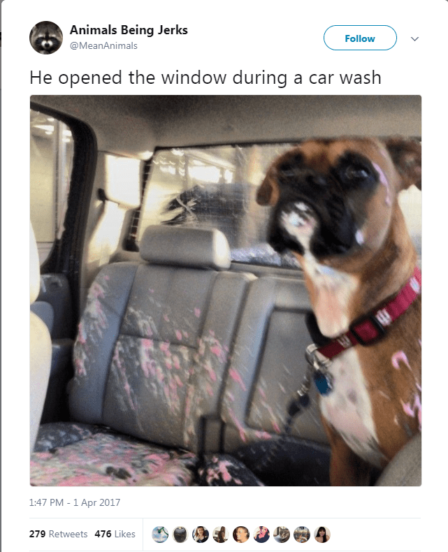 Dog - Animals Being Jerks Follow @MeanAnimals He opened the window during a car wash 1:47 PM - 1 Apr 2017 279 Retweets 476 Likes