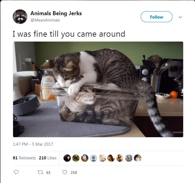 Cat - Animals Being Jerks Follow @MeanAnimals I was fine till you came around ah iquid Dishwas 1:47 PM - 5 Mar 2017 61 Retweets 210 Likes ti 61 210
