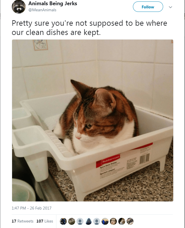 Cat - Animals Being Jerks @MeanAnimals Follow Pretty sure you're not supposed to be where our clean dishes are kept. Rubbermaid Seace-Saver Preiner wetelr cempat 1:47 PM - 26 Feb 2017 17 Retweets 107 Likes