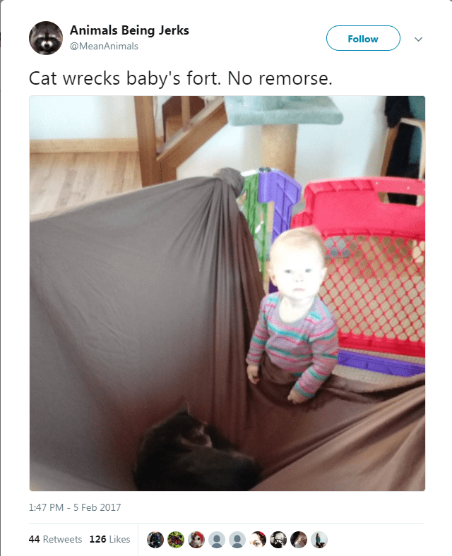 Product - Animals Being Jerks Follow @MeanAnimals Cat wrecks baby's fort. No remorse. 1:47 PM 5 Feb 2017 44 Retweets 126 Likes