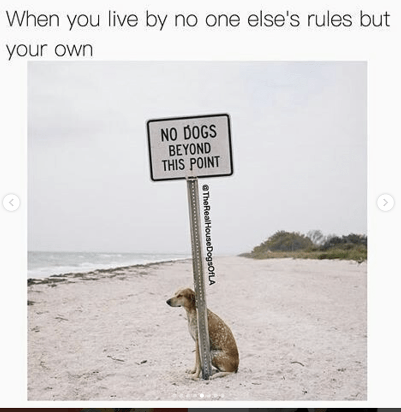 work meme - Text - When you live by no one else's rules but your own NO DOGS BEYOND THIS POINT TheRealHouseDogsOfLA