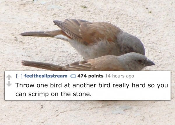 Bird - 474 points 14 hours ago -] feeltheslipstream Throw one bird at another bird really hard so you can scrimp on the stone.