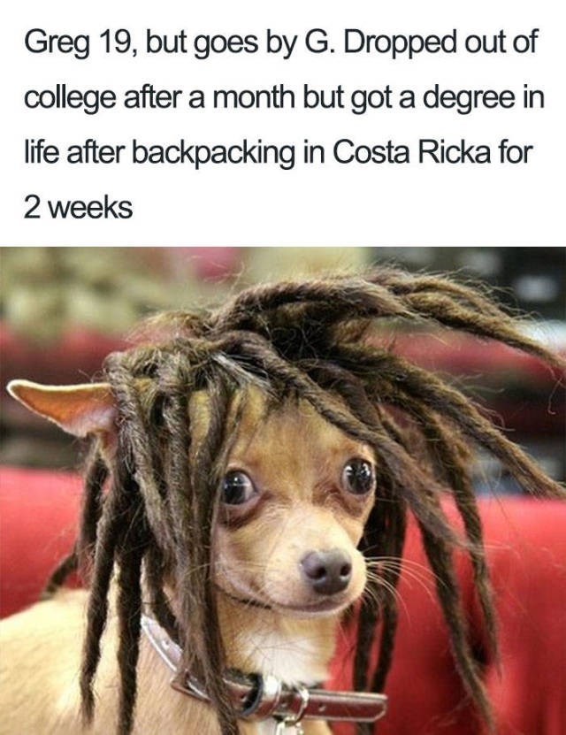 chihuahua wearing brown dreadlocks about a guy that dropped out of college and got a degree in life
