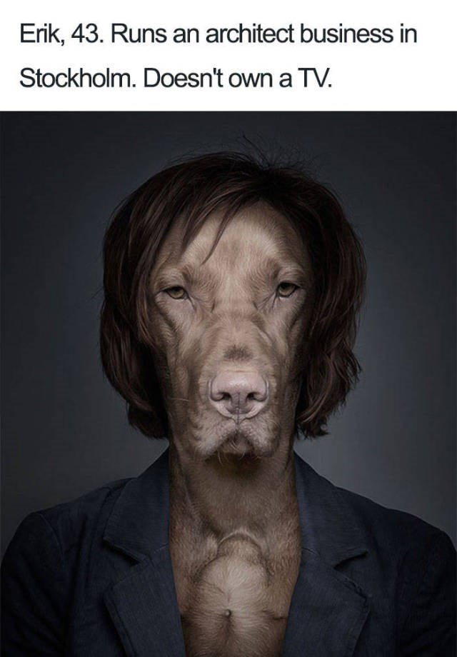 grey dog wearing brown wig - of an architect that doesn't own a tv