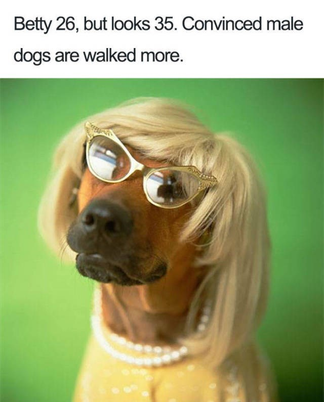 brown dog wearing blonde wig, gold winged glasses, yellow shirt and pearls - about a woman looking older than her age