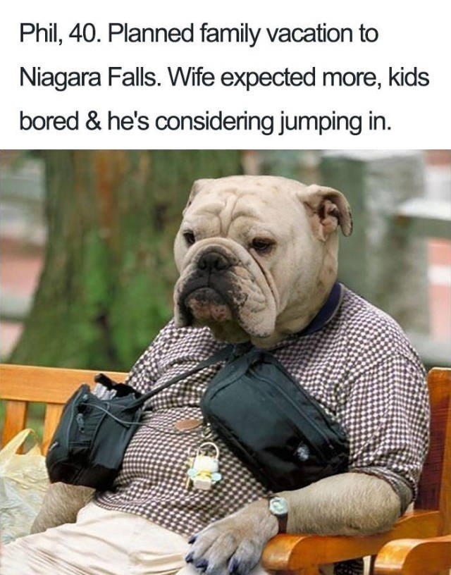 dog wearing checked shirt sitting on park bench - about a man that planned a vacation with his family and they don't like it