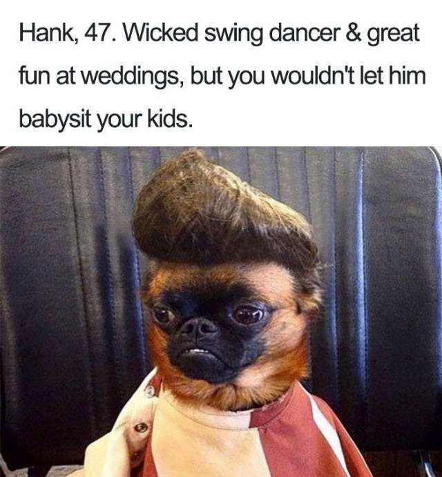 chihuahua wearing elvis wig and striped shirt Dog Bio Memes - man that you wouldn't let babysit your kids