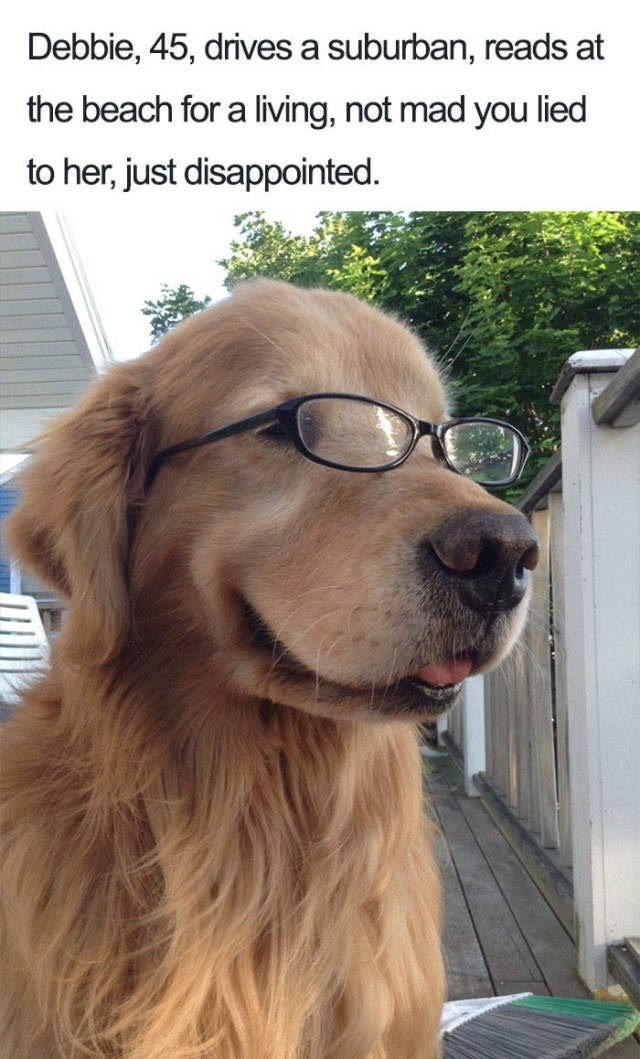 golden retriever wearing glasses Dog Bio Memes - suburban woman