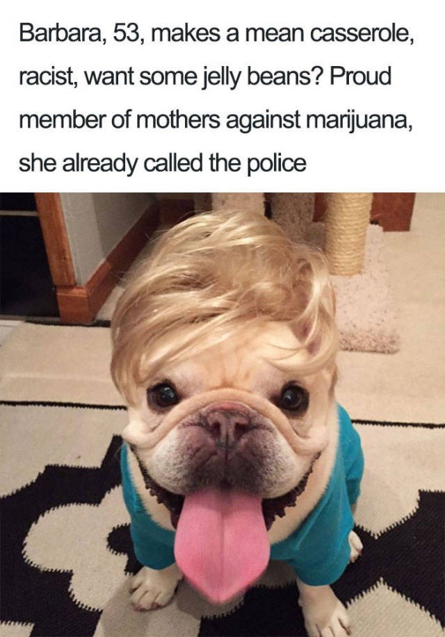 small dog wearing blue shirt and blonde up do wig Dog Bio Memes - woman makes casserole, hated weed