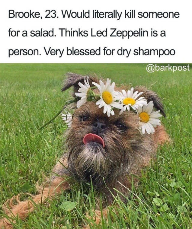 small scruffy dog wearing daisy chain on head Dog Bio Memes - loves dry shampoo and will kill for a salad