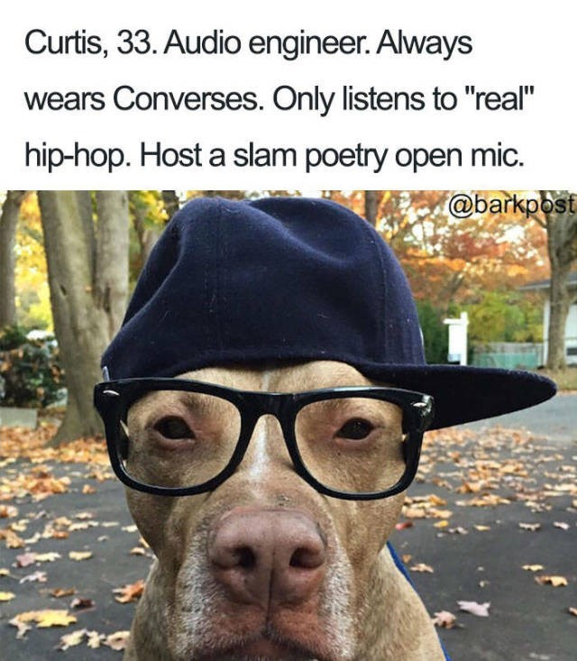 dog wearing blue cap on side and black glasses Dog Bio Memes - audio engineer that wears converses