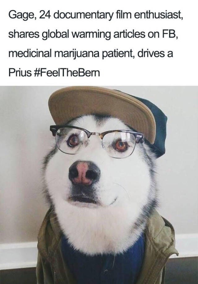 siberian husky wearing cap glasses and jumper Dog Bio Memes - about a documentary enthusiast