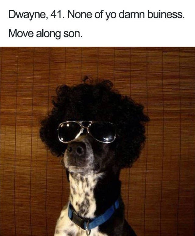 black and white dog wearing aviator sunglasses and black afro wig Dog Bio Memes - Dwayne, 41. None of yo damn buiness. Move along son