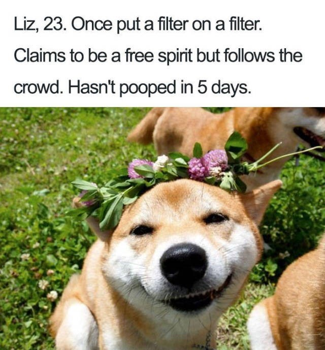 orange and white dog wearing purple flower wreath on head Dog Bio Memes - free spirit that put a filter on a filter