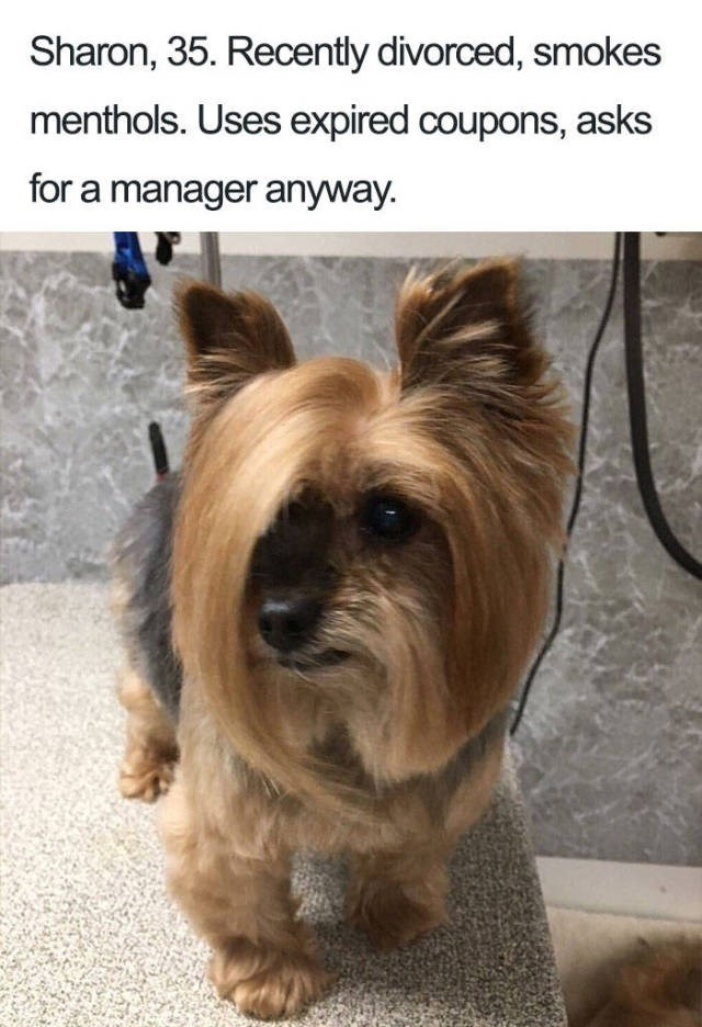 terrier dog with hair combed into side fringe Dog Bio Memes - reticently divorced and uses expired coupons