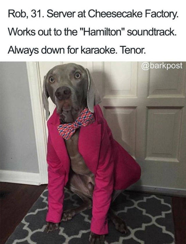"grey dog wearing pink suit and tie Dog Bio Memes - Weimaraner - Rob, 31. Server at Cheesecake Factory. Works out to the ""Hamilton"" soundtrack. Always down for karaoke. Tenor. @barkpost"