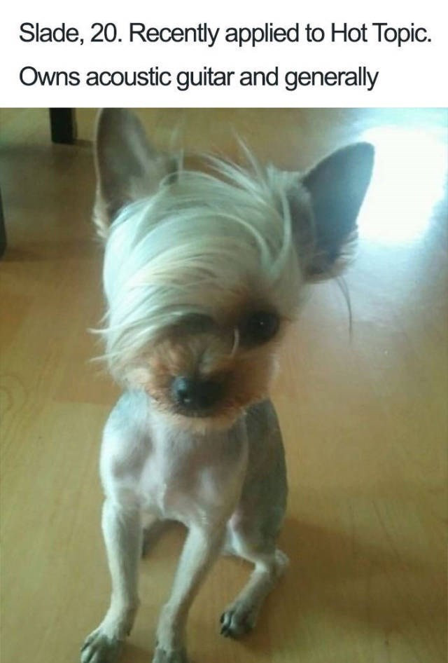 Dog Bio Memes white chihuahua with side fringe hair style