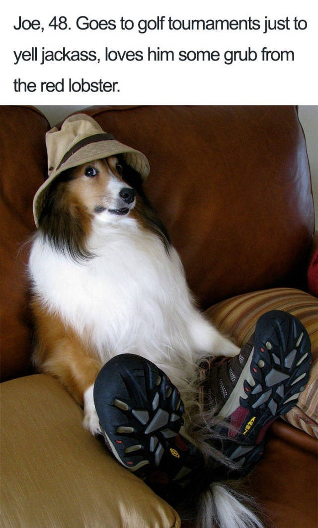 Shetland sheepdog wearing beige hat and hiking shoes sitting on couch Dog Bio Memes - Joe, 48. Goes to golf toumaments just to yell jackass, loves him some grub from the red lobster.