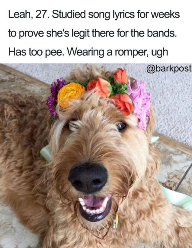 curly dog wearing colorful flower wreath on head Dog Bio Memes - Leah, 27. Studied song lyrics for weeks to prove she's legit there for the bands. Has too pee. Wearing a romper, ugh @barkpost